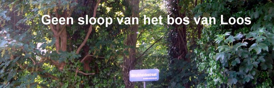 bos_van_Loos
